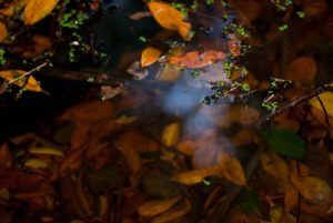 Paisajes sonoros del Jardín Canario: nocturno