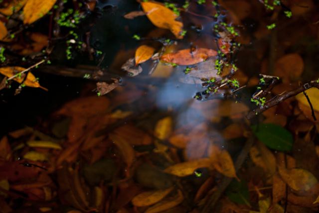 Jardín Canario nocturno, foto por Busy