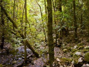 Bosque de El Cedro